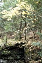 08-stump-rock