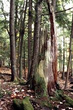 09-rotten-stump